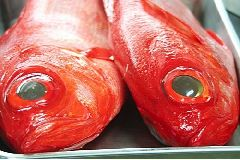 【金目鯛】駿河湾の幸☆金目鯛煮付けを堪能プラン